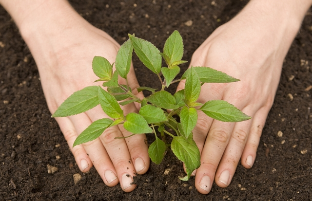 Se preferir usar fertilizantes, opte pelos orgânicos.