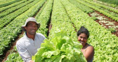 Baixe livros digitais sobre agricultura familiar DE GRAÇA!