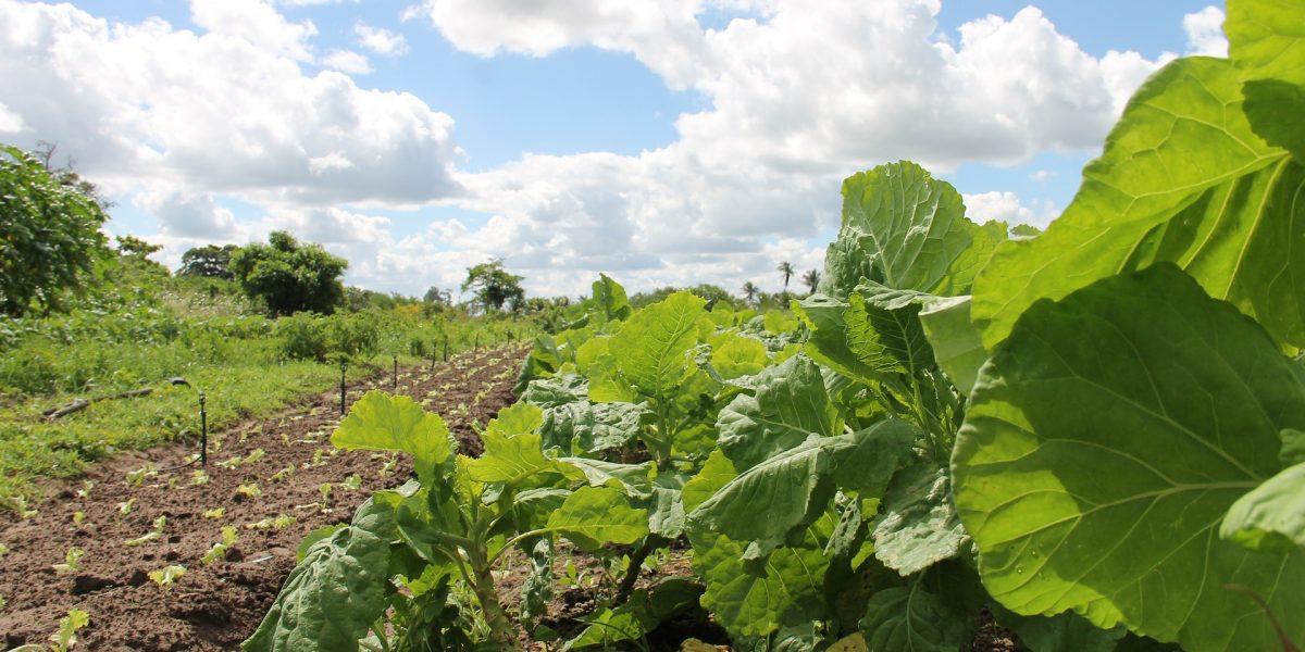Agptea inicia tratativas para abertura de curso em Ciências Agrárias no IFFar